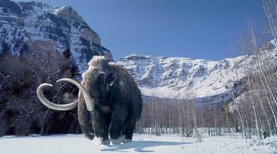 Resucitan genes mutados de un mamut | El Imparcial de Oaxaca