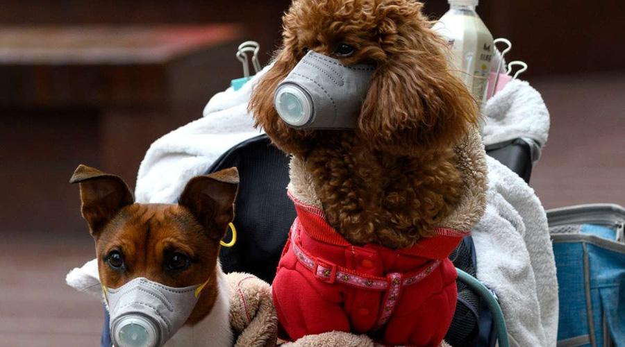 Detectan el primer perro infectado con Covid-19 en Hong Kong | El Imparcial de Oaxaca