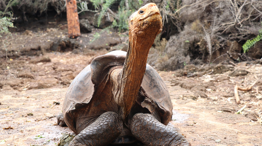 Con éxito reproducen tortuga de 100 años, se salva una especie | El Imparcial de Oaxaca