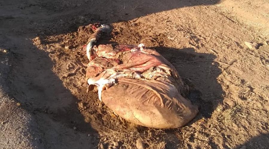 Bolsa con restos de una vaca moviliza a Policía en Zaachila | El Imparcial de Oaxaca