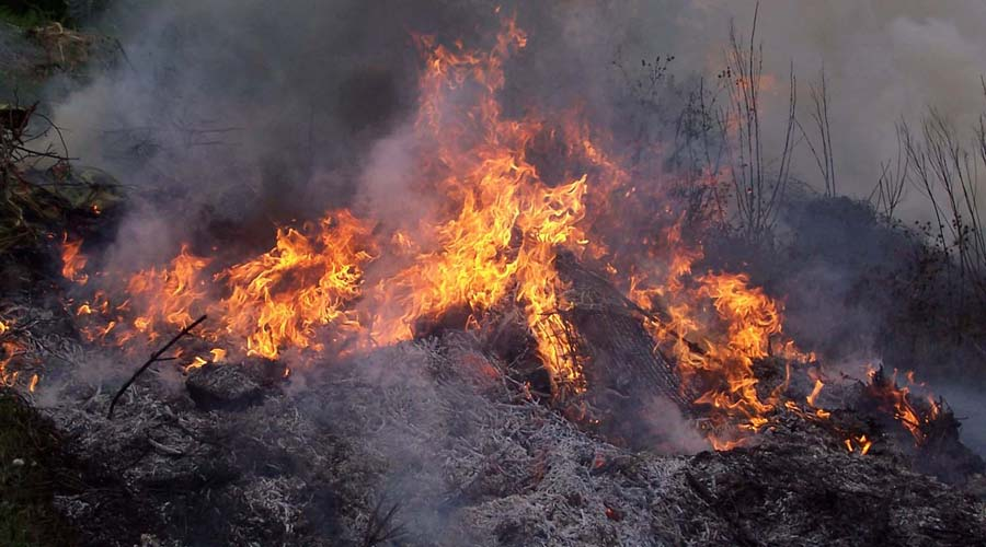 Se propaga incendio forestal en Etla | El Imparcial de Oaxaca