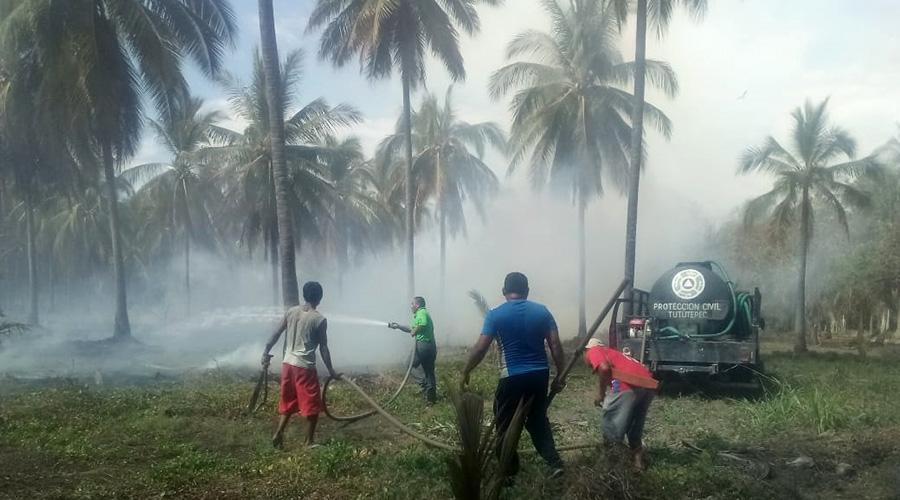 Caza iguanas causan incendio en la Costa | El Imparcial de Oaxaca