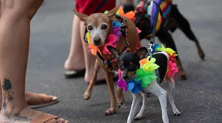 Desfilan perros en el carnaval de Río de Janeiro | El Imparcial de Oaxaca
