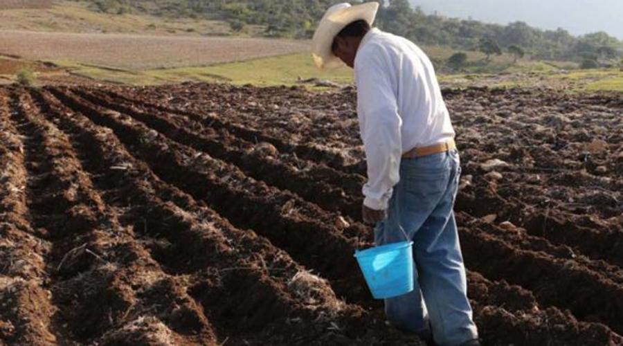 Se reduce el número de cultivos en el campo oaxaqueño | El Imparcial de Oaxaca