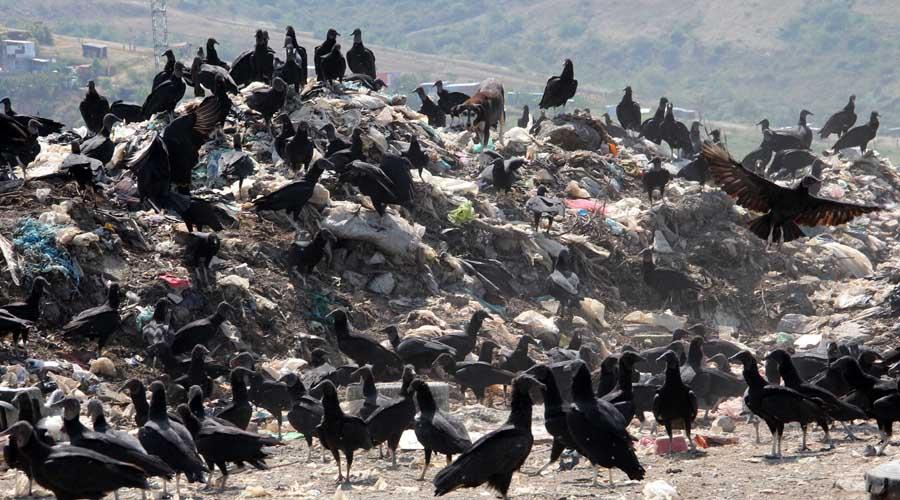 Fracasan proyectos para reubicar basurero de la capital