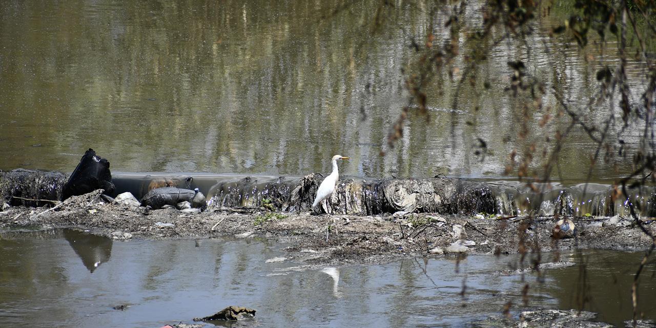 """""""Secan"""" contaminación e invasión a ríos urbanos"""