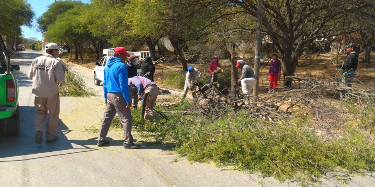 Podan árboles en agencia de Huajuapan   El Imparcial de Oaxaca