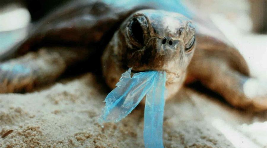 Plástico absorbe olor marino; las tortugas lo confunden con alimento   El Imparcial de Oaxaca