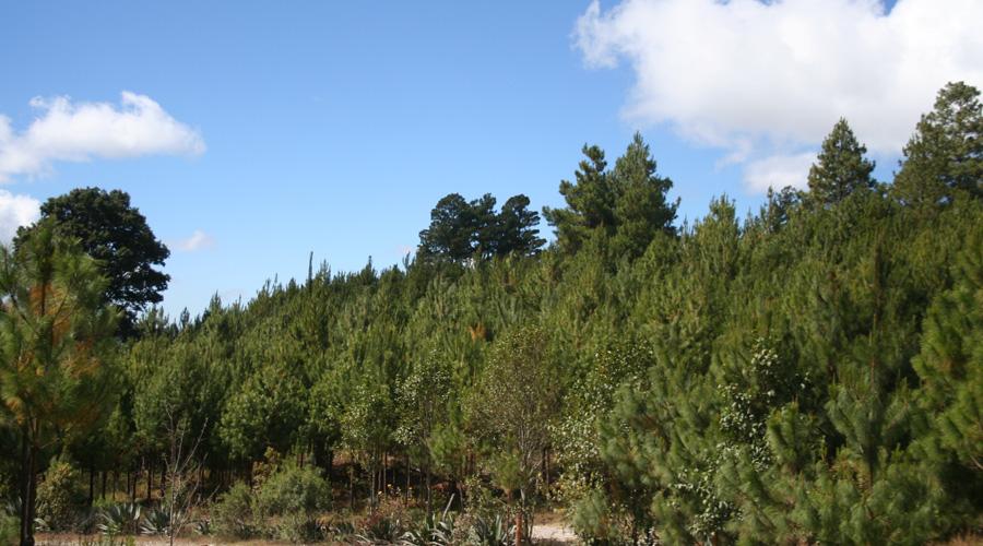 Presentan iniciativa para actualizar la Ley Forestal de Oaxaca   El Imparcial de Oaxaca