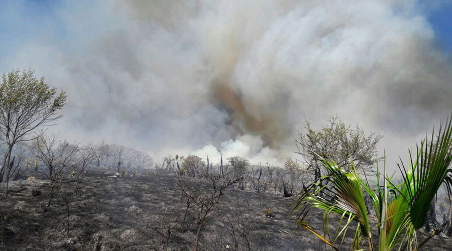 Se pierden 25 mil hectáreas de árboles al año en Oaxaca | El Imparcial de Oaxaca