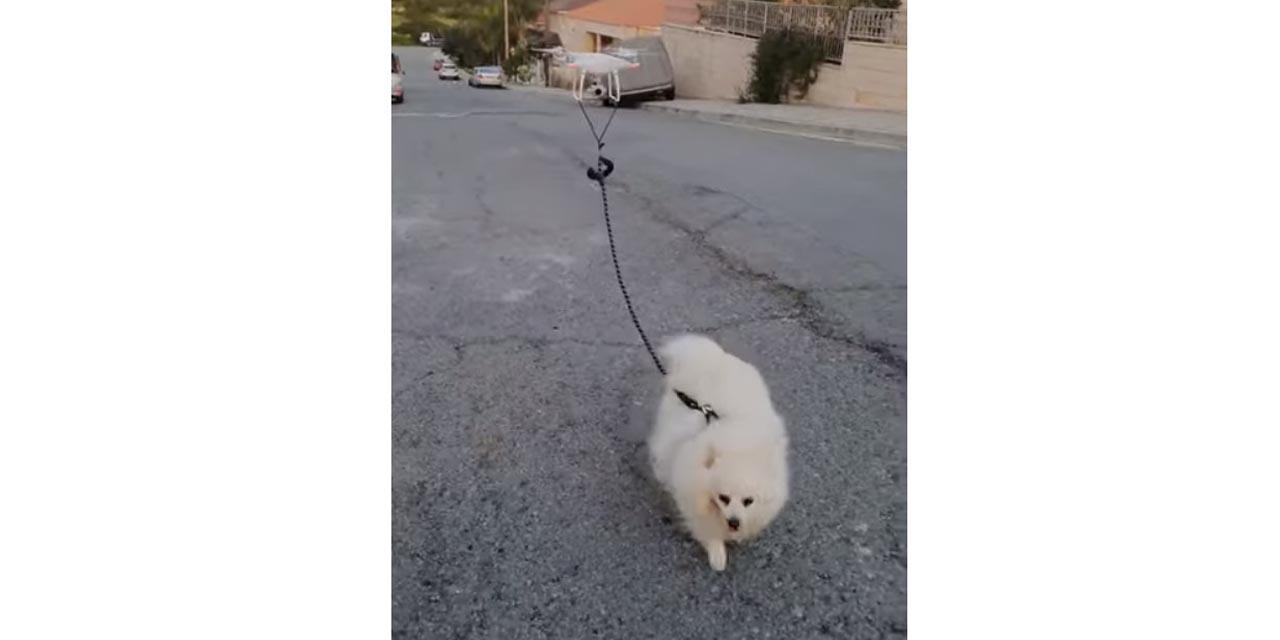 Video: Dron saca a pasear a un perro en tiempos de cuarentena | El Imparcial de Oaxaca