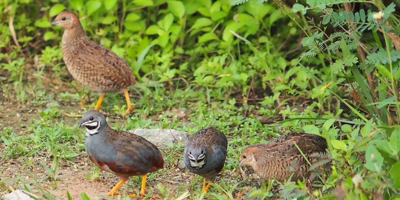 Brota gripe aviar H5N6 en Filipinas, autoridades aseguran está controlado | El Imparcial de Oaxaca