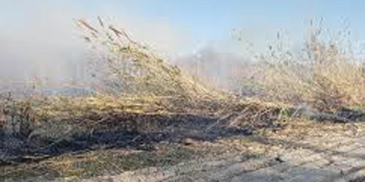 Incendio de carrizales causó pánico en La Raya | El Imparcial de Oaxaca