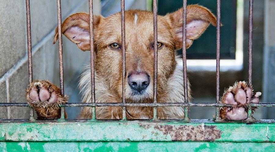 Va al Senado propuesta de 4 años de cárcel para quien abandone perros | El Imparcial de Oaxaca