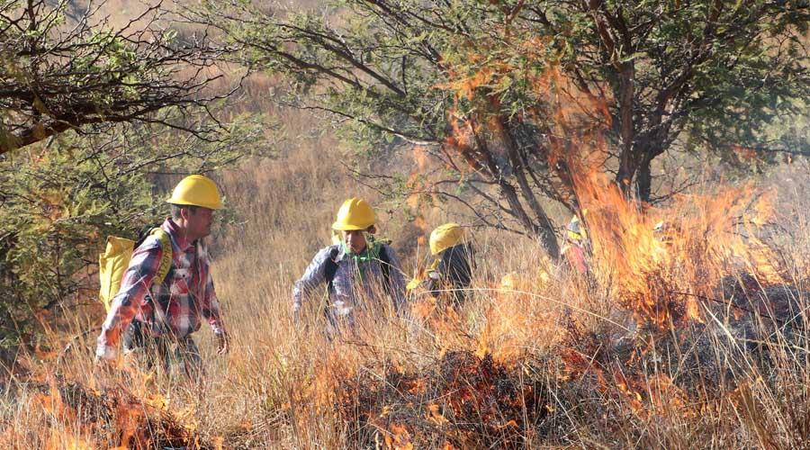 Baja a 64 número de incendios forestales en México | El Imparcial de Oaxaca