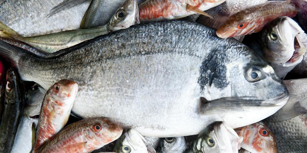 Pescadores apoyarían con 60 toneladas semanales durante contingencia | El Imparcial de Oaxaca