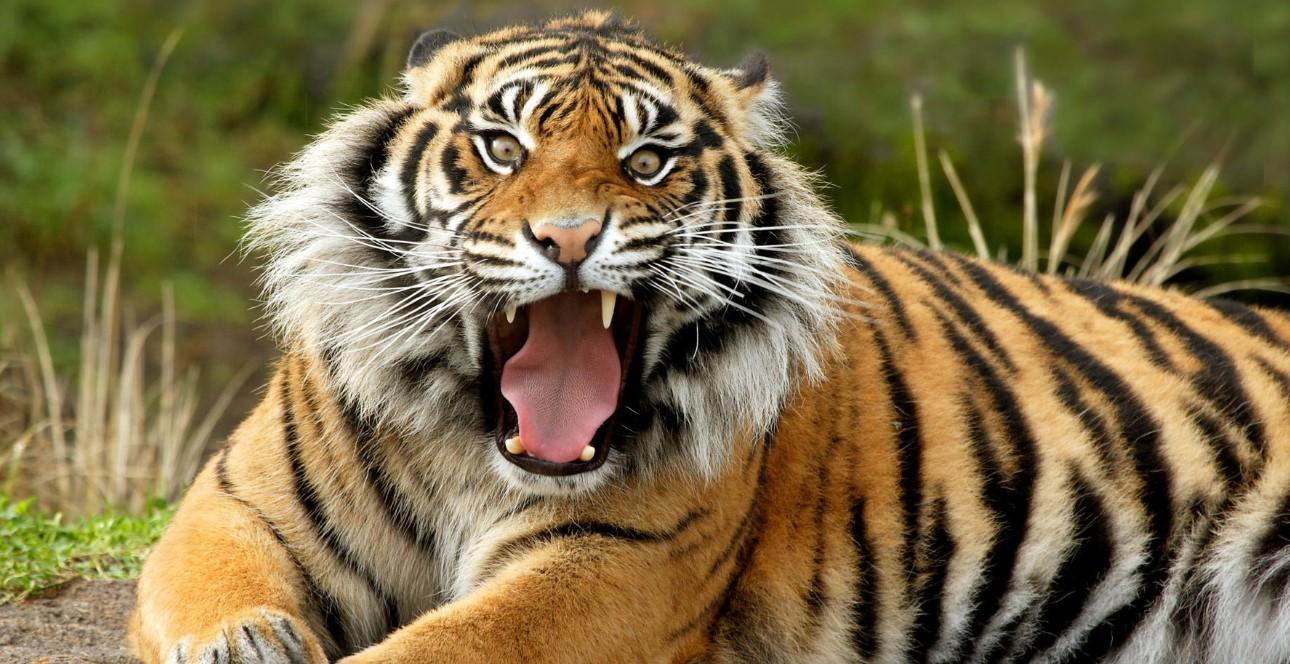 Video: Abandonan zoológico en Tailandia con decenas de animales hambrientos | El Imparcial de Oaxaca