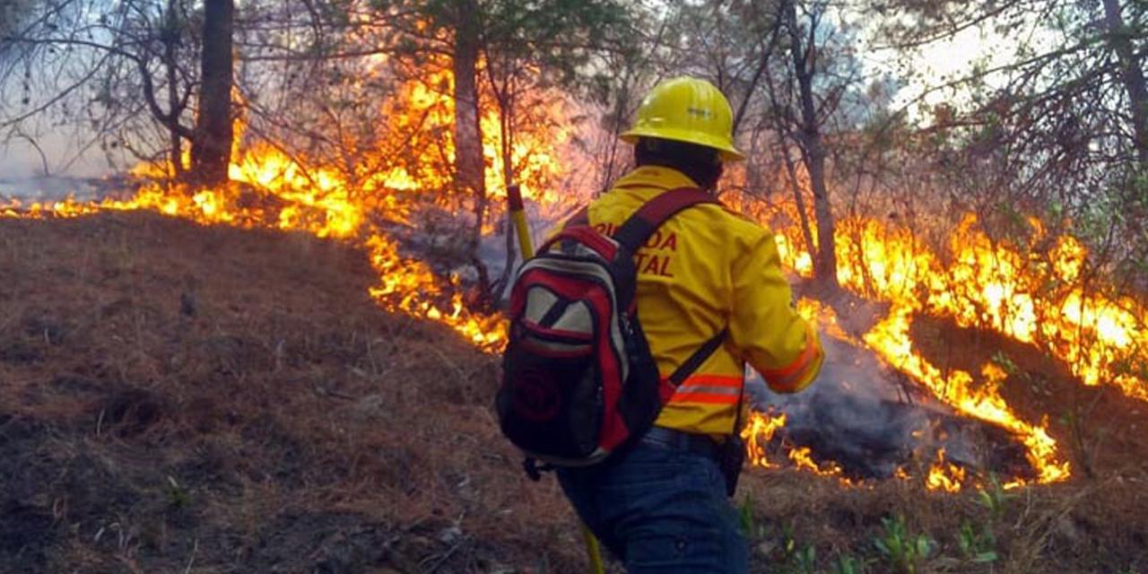 Se mantienen activos 4 incendios forestales en Oaxaca | El Imparcial de Oaxaca