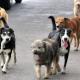 Aumentan casos de abandono de mascotas en Oaxaca durante pandemia