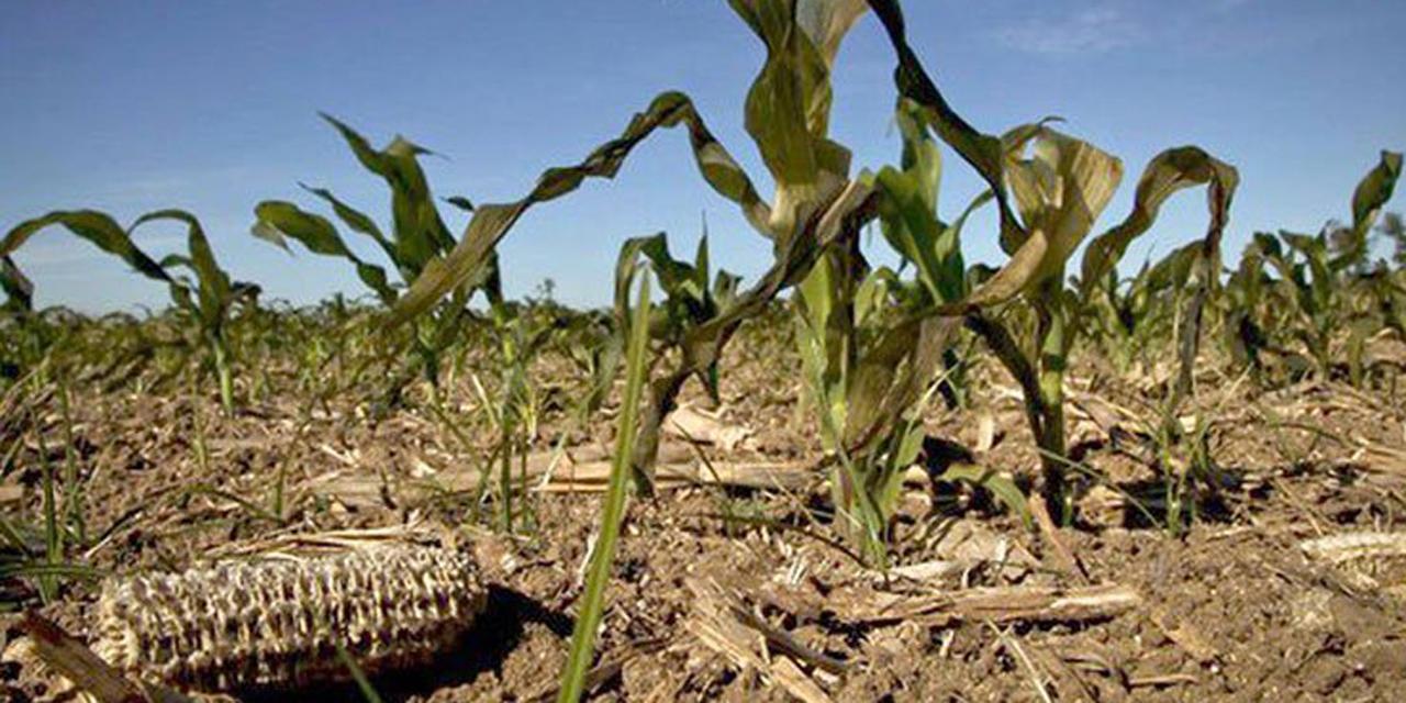 Sequía, una de las mayores afectaciones al campo mixteco | El Imparcial de Oaxaca