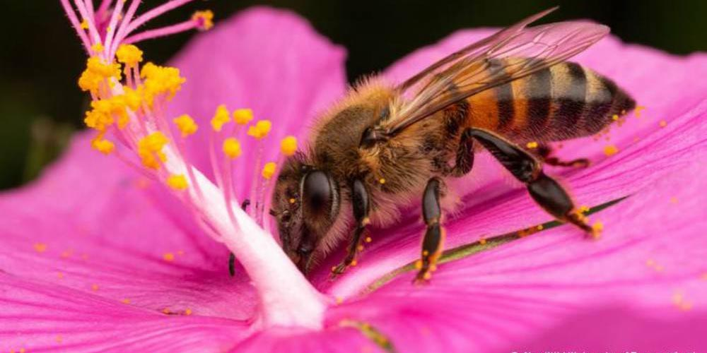 Prevén escasez de alimentos por ausencia de abejas | El Imparcial de Oaxaca