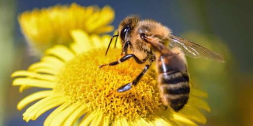ONU pide comprometernos a salvar a las abejas   El Imparcial de Oaxaca