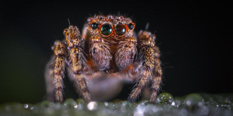 Arañas se vuelven caníbales por cambio climático   El Imparcial de Oaxaca