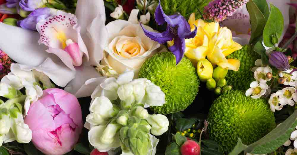 Flores que puedes regalar según su signo del zodiaco | El Imparcial de Oaxaca