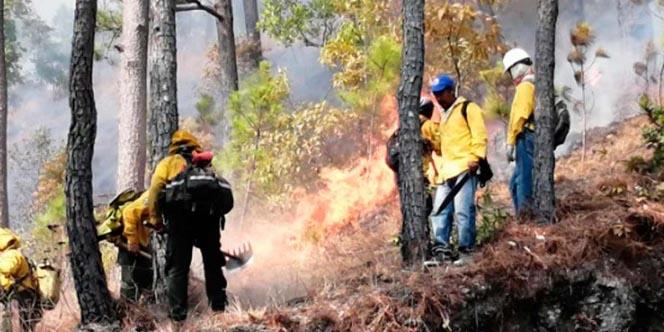 Bajaron 40% los incendios forestales en el país | El Imparcial de Oaxaca