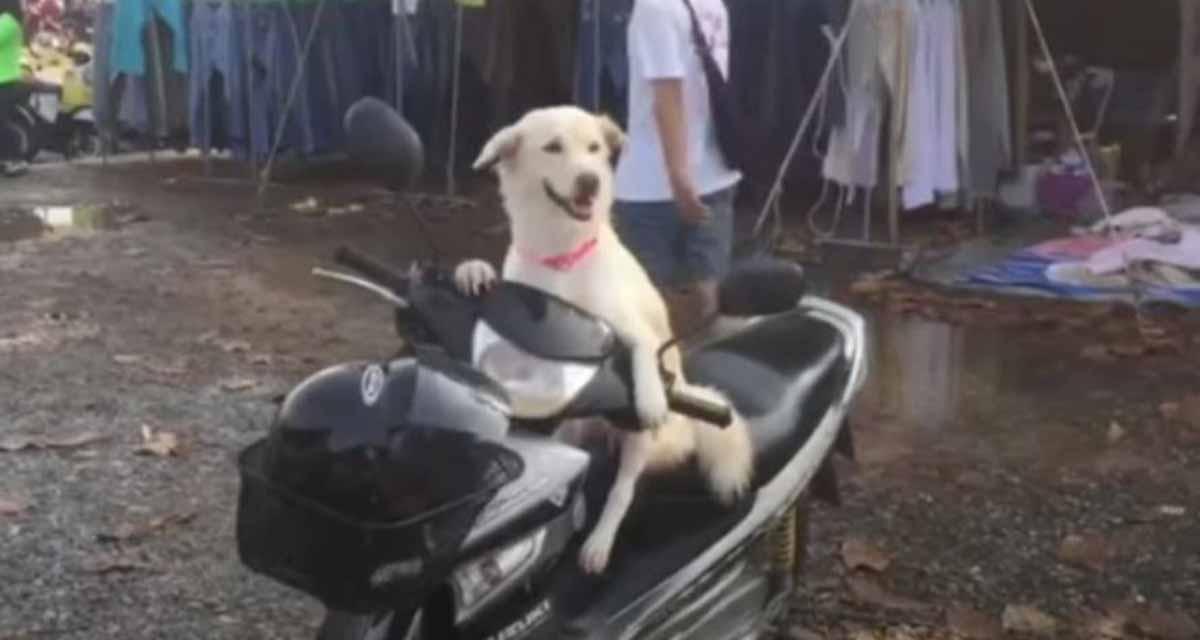 Video: Perro se hace famoso por espera sentado en una moto a su dueña afuera de un mercado | El Imparcial de Oaxaca