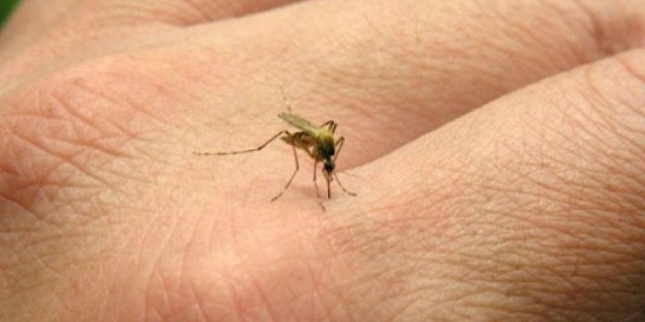 Aumentan casos de dengue en Oaxaca | El Imparcial de Oaxaca