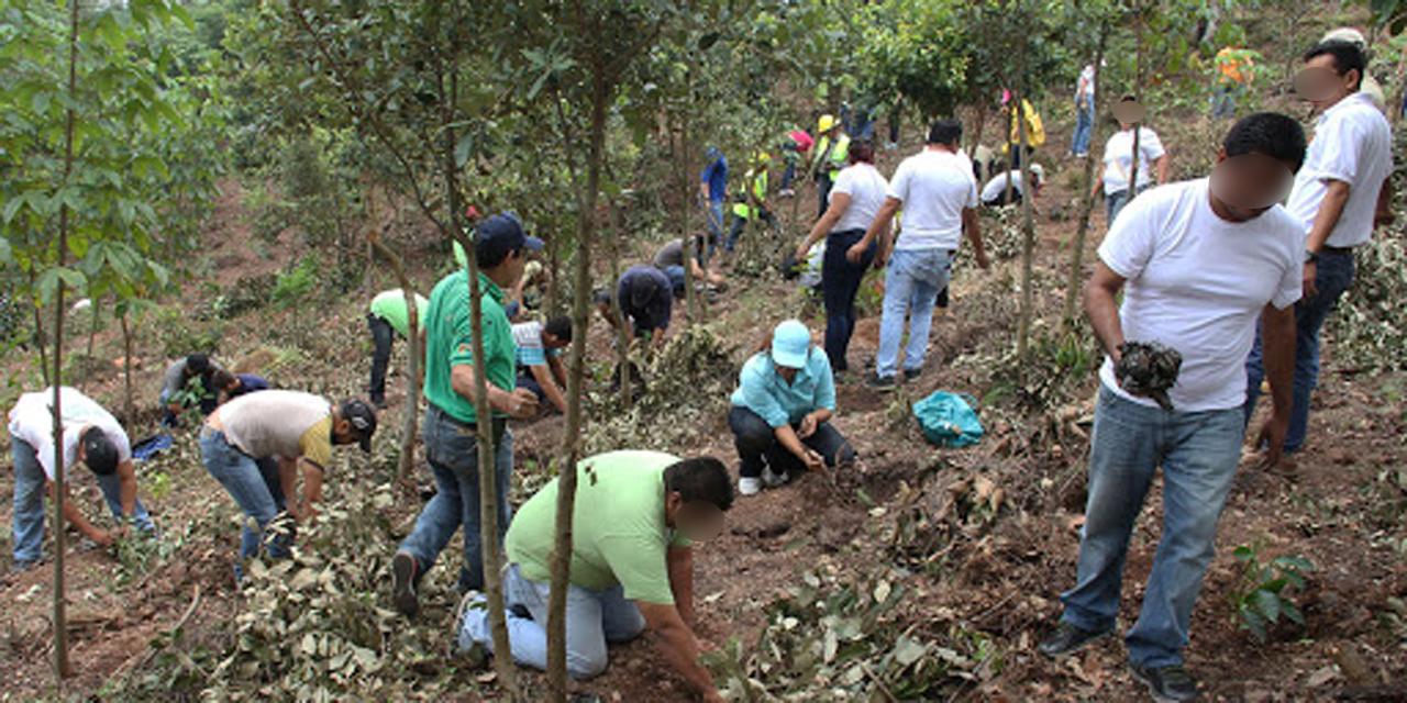 Oaxaca enfrenta rezago en protección ambiental | El Imparcial de Oaxaca