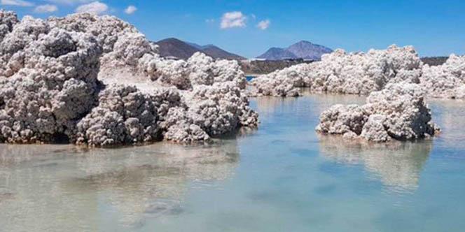 15 de julio como Día Nacional de los Estromatolitos   El Imparcial de Oaxaca