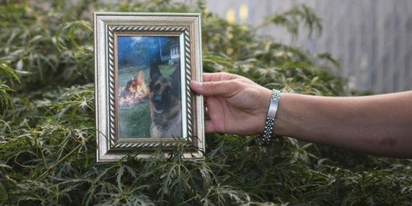 Muere primer perro contagiado por Covid-19 en EU   El Imparcial de Oaxaca
