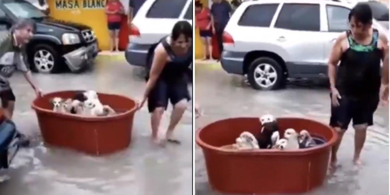 Familia salva a sus perritos luego de perder su hogar a causa de 'Hanna' | El Imparcial de Oaxaca