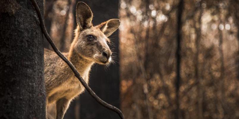 Más de 3 mil millones de animales fueron víctimas de incendios en Australia | El Imparcial de Oaxaca