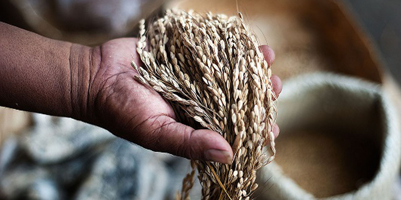 Alertan por iniciativa de privatización de semillas | El Imparcial de Oaxaca