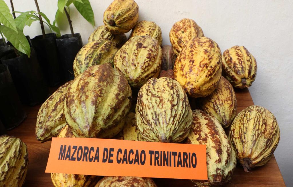 Productores de chocolate piden diálogo con diputados de Oaxaca | El Imparcial de Oaxaca