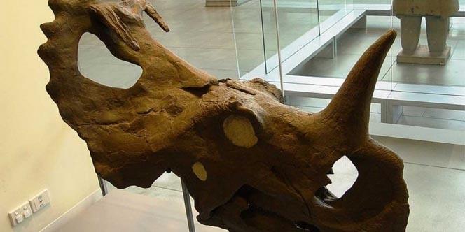 Descubren tumor de cáncer en dinosaurio de 77 millones de años | El Imparcial de Oaxaca