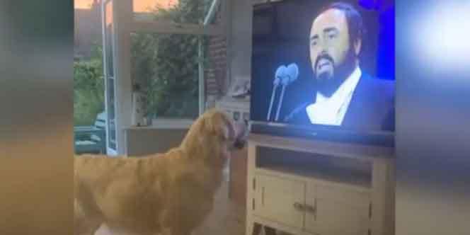 Video: Mira adorable reacción de un perrito al escuchar música de Pavarotti   El Imparcial de Oaxaca