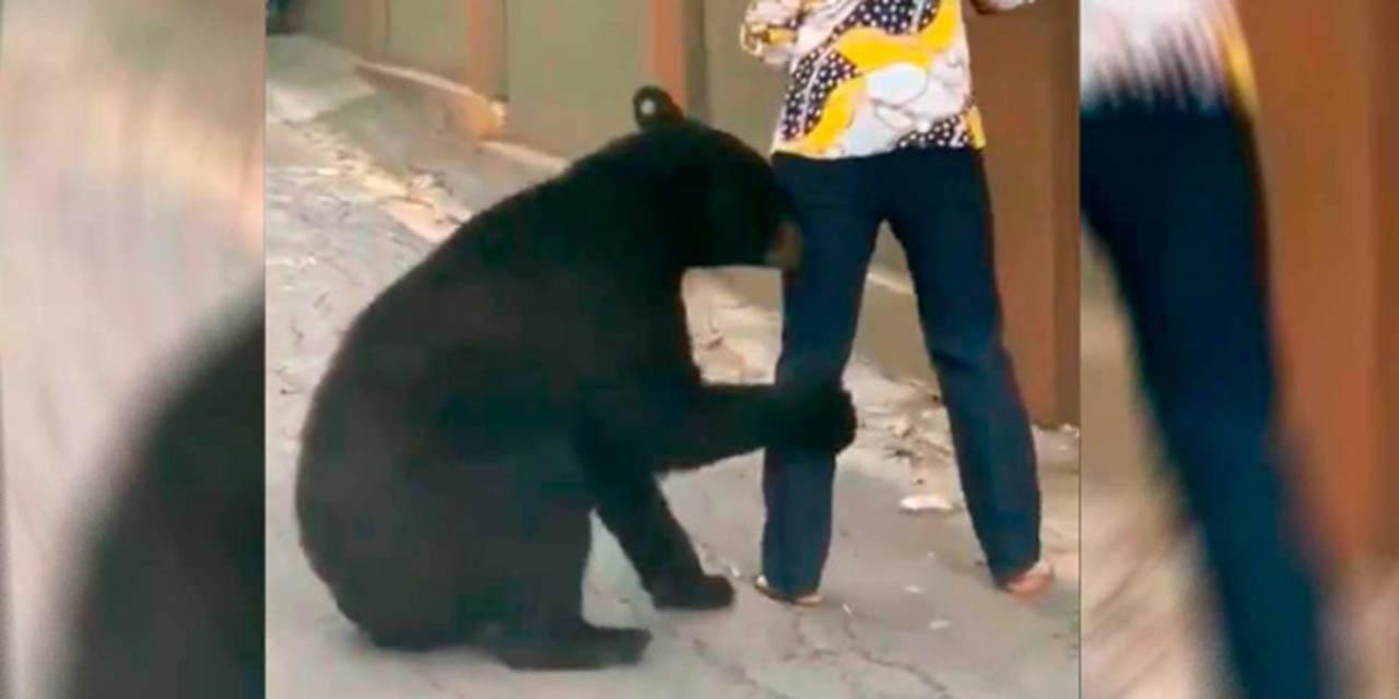 Preparan denuncia contra quien ordenó castrar a 'oso amigable' | El Imparcial de Oaxaca