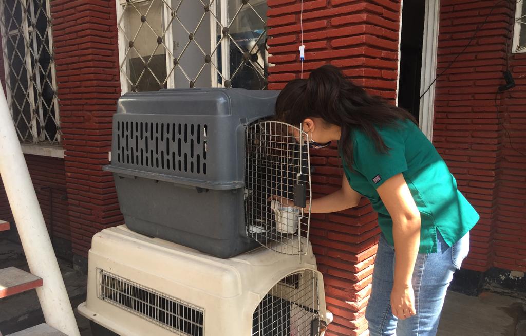 Hospital Veterinario de Especialidades, la mejor atención para mascotas   El Imparcial de Oaxaca
