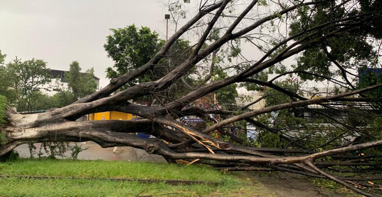 Carreteras inundadas y árboles caídos por lluvias   El Imparcial de Oaxaca