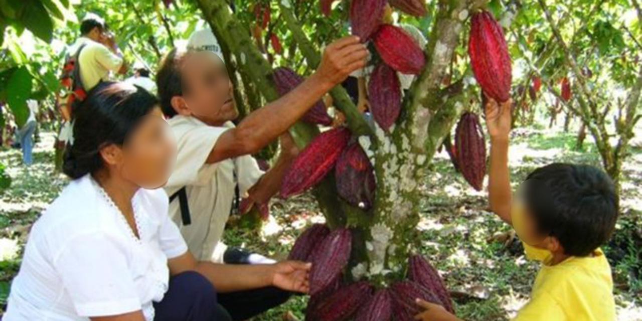 Chocolateros y cacaoteros de Oaxaca rechazan nuevo impuesto | El Imparcial de Oaxaca