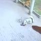 """Video: Gato """"aterriza"""" en la cabeza de un hombre, lo deja inconsciente"""
