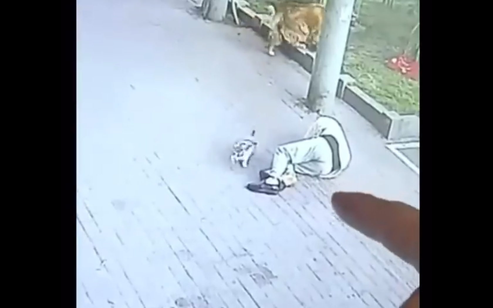 """Video: Gato """"aterriza"""" en la cabeza de un hombre, lo deja inconsciente   El Imparcial de Oaxaca"""