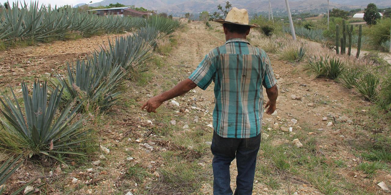 Covid-19 noquea a la industria del mezcal | El Imparcial de Oaxaca