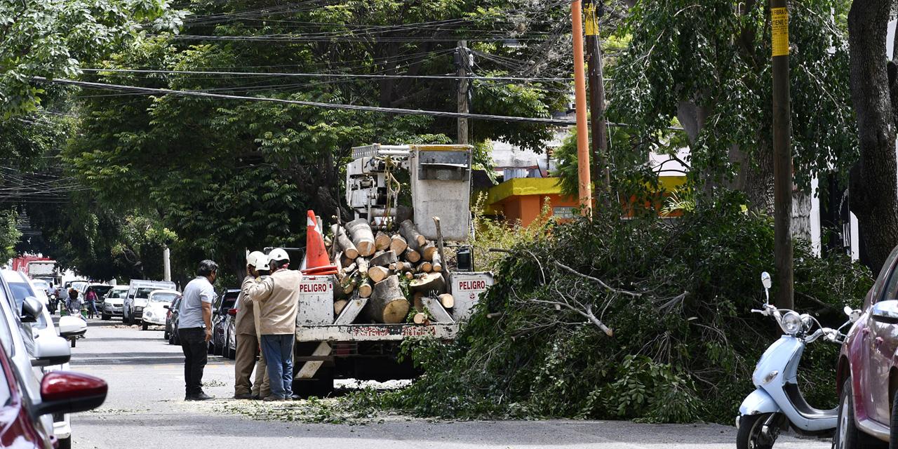 Más de 45 árboles perdidos en la capital oaxaqueña | El Imparcial de Oaxaca