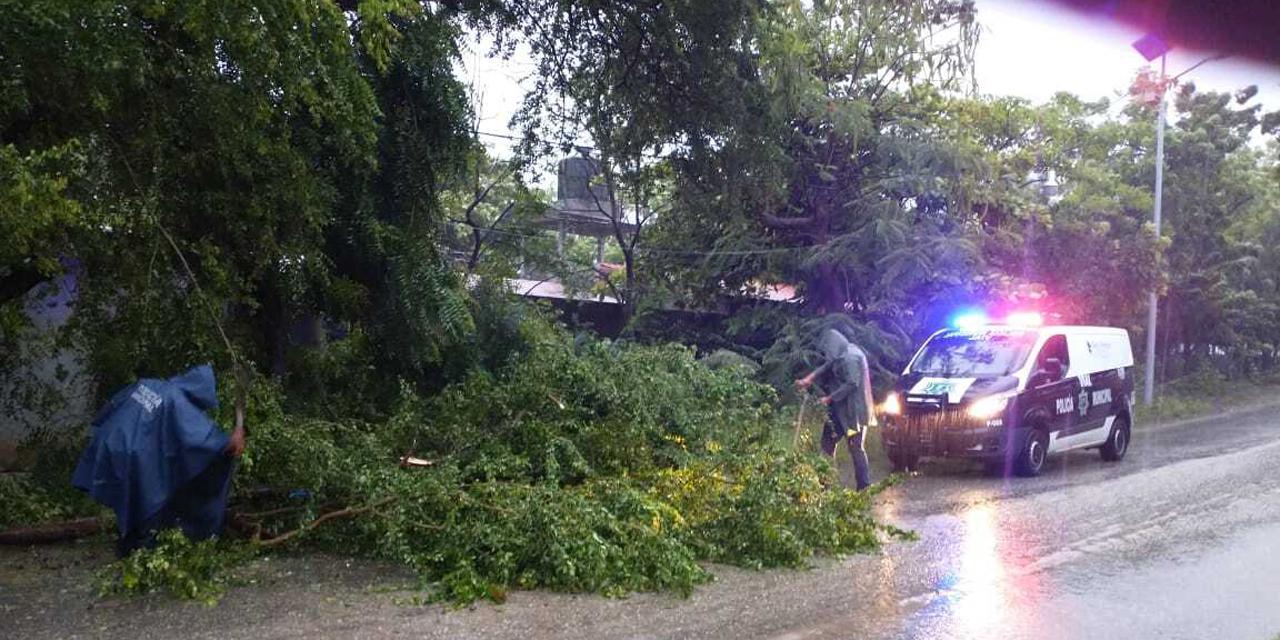 Se reportan árboles caídos en la Costa oaxaqueña por fuertes lluvias | El Imparcial de Oaxaca