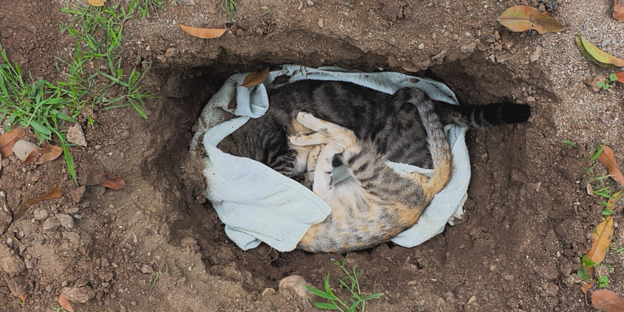 Envenenamiento de gatos en Cuicatlán debe ser sancionado   El Imparcial de Oaxaca